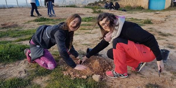 Plantada d'alzineres a la Granadella - Autor: Marxa de la Boira