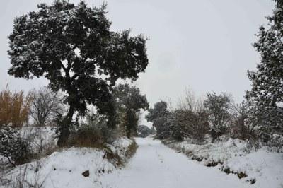 Camins nevats - Fotografia: Montse Gomà